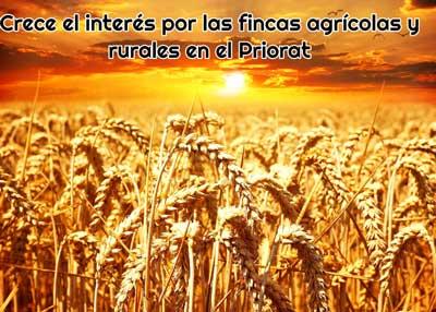 crece interes por fincas agricolas y rurales priorat